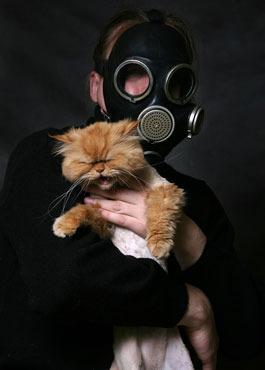 Аллергия: месть поруганной природы